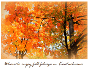 Top 5 Fall Foliage Destinations in Kentuckiana