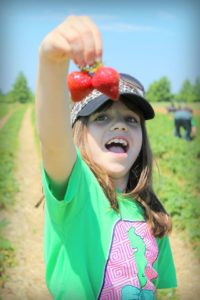 strawberry picking farm louisville