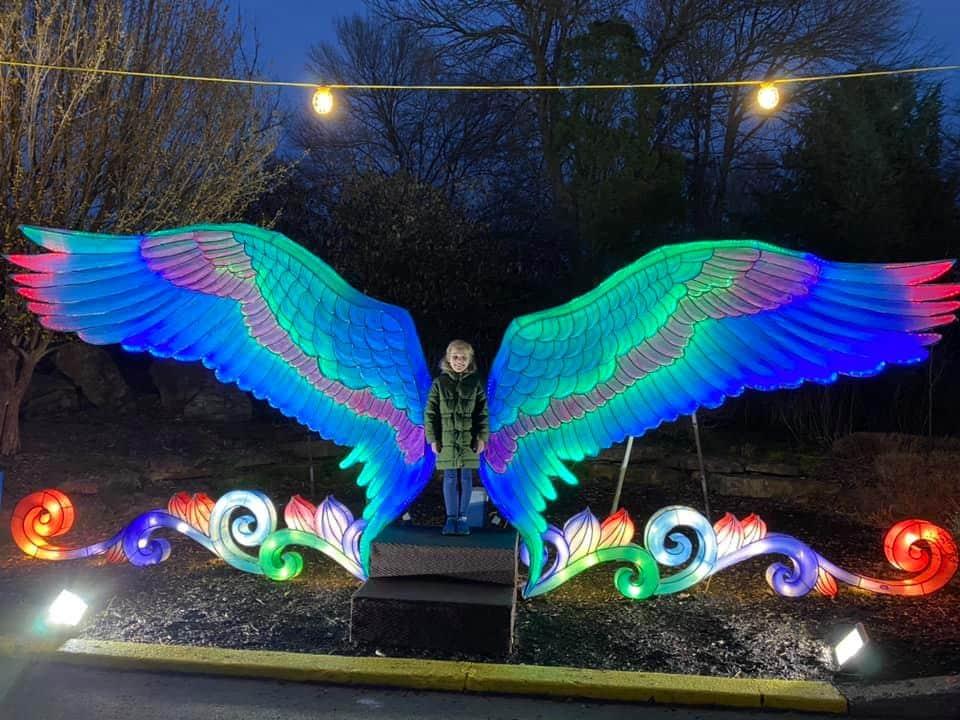 Wild Lights Louisville