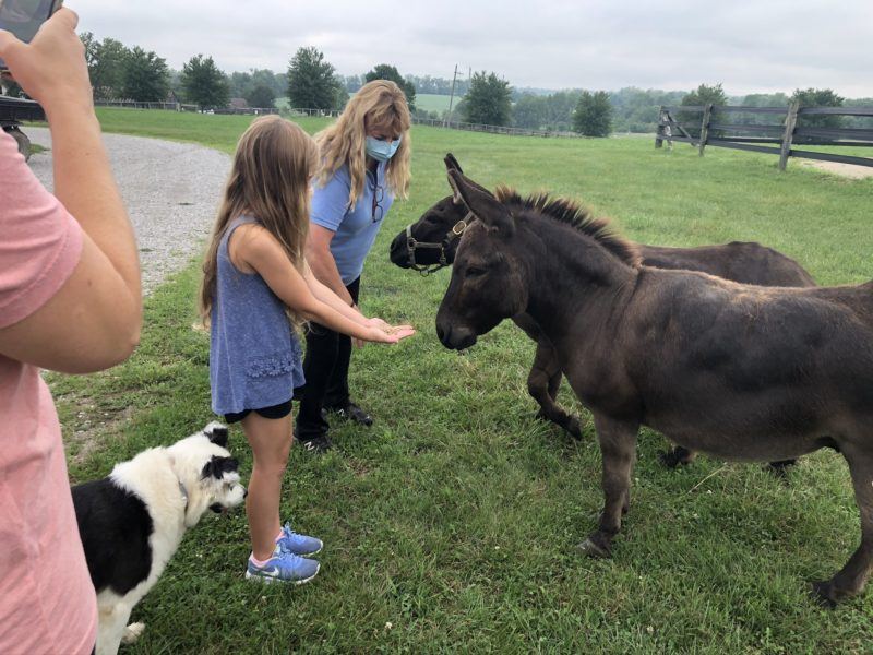 animal encounters near Louisville