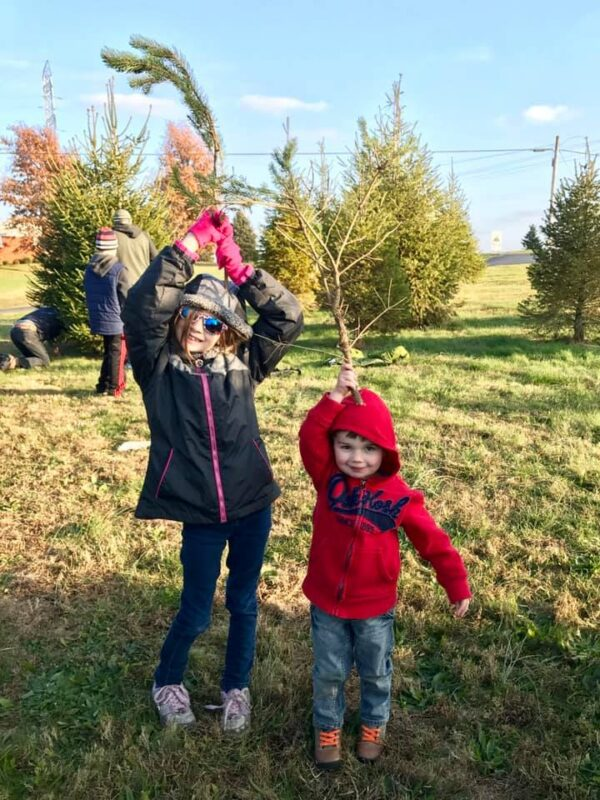 christmas tree farms near Louisville